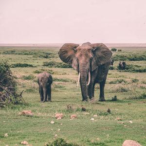 elephantrekking